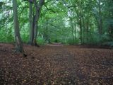 Thetford Forest in the rain