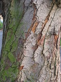 Twisted bark