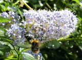 Yet more beeblogging
