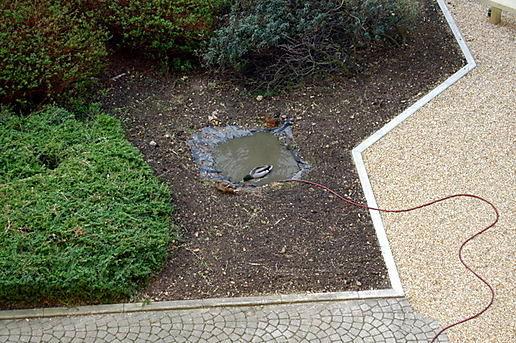 Backyard Ponds For Ducks : backyard duck pond  get domain pictures  getdomainvidscom