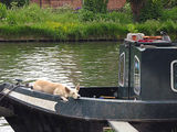 Narrow Boat Dog