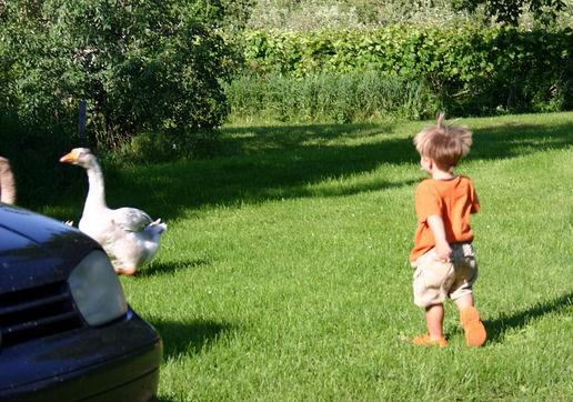 http://moblog.net/media/f/a/c/factotum/wild-goose-chase-3.jpg