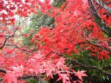 Autumn Reds and Yellows at Stobo