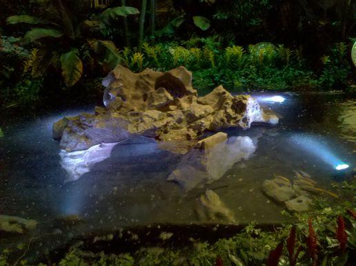 koi pond lighting ideas. Koi Pond In The Bellagio Lighting Ideas
