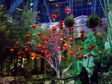 The Conservatory @ The Bellagio