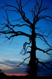 Dead tree blues
