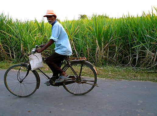 Bicycle Man and Sugar Cane