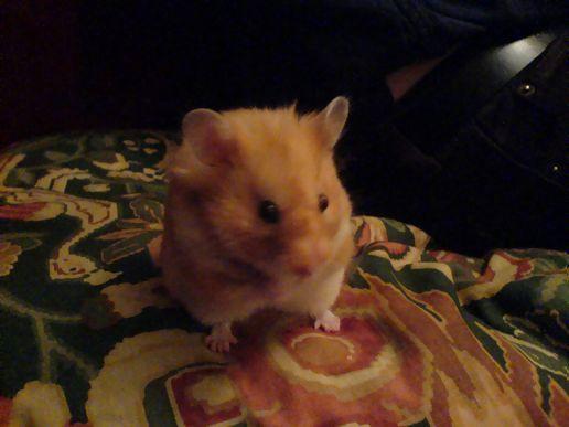 Hamster Feet At Hildegard S Moblog