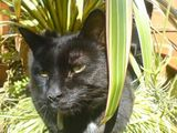 Arnold among the ornamental grasses