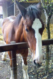 Foal for Silar