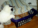 Further adventures in a laundry basket