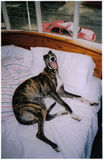 Lurchers are not allowed on the bed.