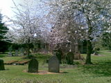 Church yard blossom