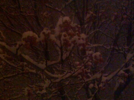 Night berries, snow