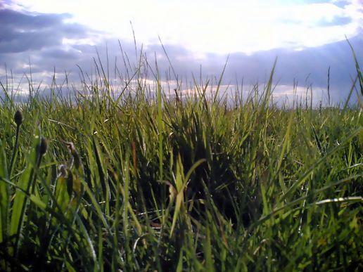 Fiction is a branch of neurology by j g ballard like success for Like long grasses