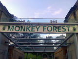 Monkey Business at the Monkey Forest!