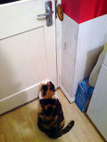 We need a cat flap...