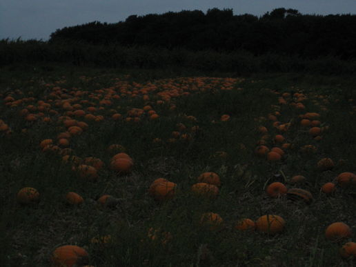 Pumpkins at dawn