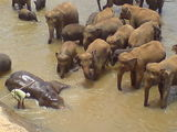 Orphaned Elephants!