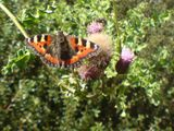 Butterfly at Crewkerne