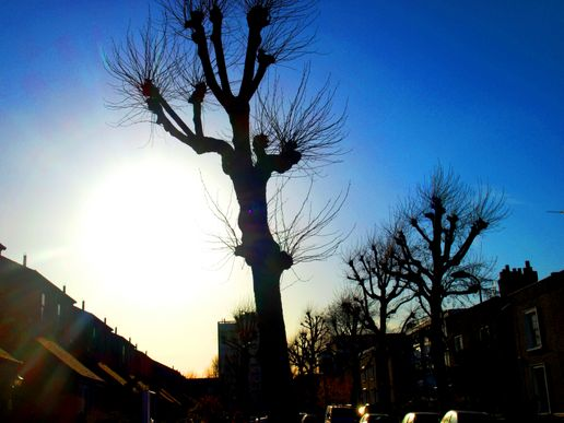 Tree in the Sun.