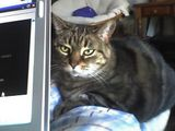 zoe considers ways to maim computer
