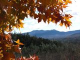 Mountains and Changing Leaves - White Mountains