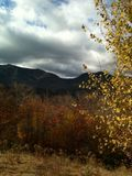 Fall Leaves - White Mountains NH