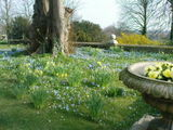 Spring at Ragley Hall