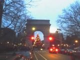 Washington square tree and lights