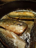 Pan Fried Mackerel