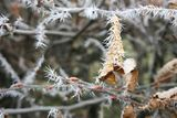 Ice Thorns