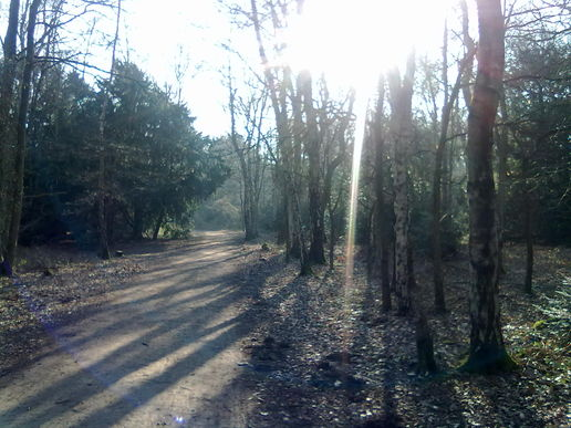 Streaming sunlight at Rufford