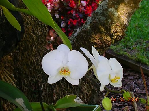 orchids and various other flowers/creatures from Mom's yard