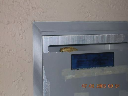 tree frog hanging out in the mail post bin