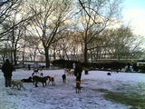 Riverside Park Dog Run - Freezing Temps!