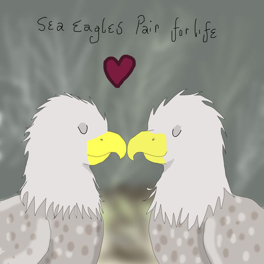 More sea eagles.
