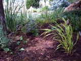Japanese fountain grass & ferns finally in the ground