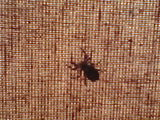 the spider on the curtain