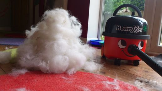I brushed my dog