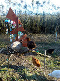 chicken adventure playground