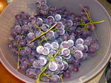 ice grapes