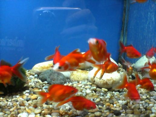 Went to the late night pet shop at view from my pocket for Fish and pets unlimited
