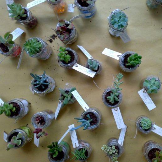 [http://moblog.net/media/m/i/n/minushabens/baby-cactus.jpg]