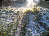 i love frosty mornings 2