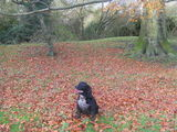 Autumn images - some of your great entries