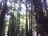 MonkeeSee says: Redwood magic. Wow.