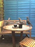 the pigeons are having a meeting...