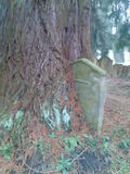 Grave stone stuck in tree!