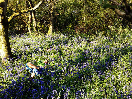Bed of bluebells